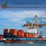 Taxas de frete baratas do mar da expedição dos transitárioes LCL FCL de China a Coronel, o Chile