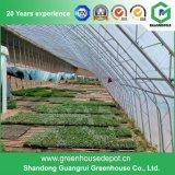 식물성 설치를 위한 필름 태양 온실