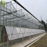 Serra di vetro resistente dell'azienda agricola del vento moderno della strumentazione