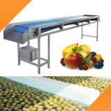 果物と野菜の加工ラインのためのベルト・コンベヤー機械