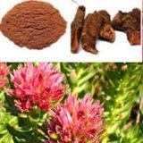 Rhodiola Rosea P. E Poudre / Nature Rhodiola Rosea P. E Extrait
