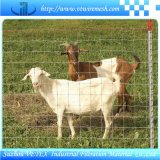 Il bestiame recinta utilizzato in azienda agricola