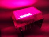 50W/100W/150W/200W/300W/400W/450W/600W/800W 가득 차있는 스펙트럼 모듈 LED는 빛을 증가한다