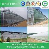 Folha do PC/casa verde plástica de película/de vidro para vegetais/jardim