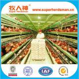 Camp de poulet de couche de batterie de qualité de coût bas