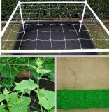 das 10cm Ineinander greifen verdrängte Grünpflanze-Stütznetz
