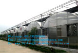 La serre chaude de tunnel de film de Chaud-Vente pour le jardin d'usines de légumes et de fleurs élèvent la tente