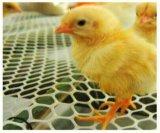 販売の若めんどりのケージシステム(Hのタイプフレーム)の農夫のための鶏の養鶏場の若めんどり電池か自動ケージ