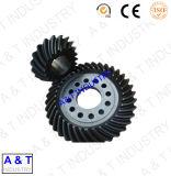 Spiral Gear Spur Gear Gear à biseau avec haute qualité