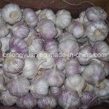 Scatola che imballa aglio bianco fresco cinese