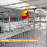 Diseño de la jaula del pollo de la batería de la casa de la granja avícola