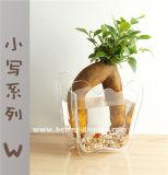 Claro acrílico colgante de vidrio jarrón (btr-q8008)