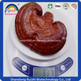 Fabrication en gros Ganoderma Lucidum Hot Sell
