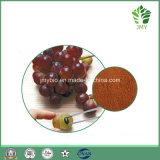 Proanthocyanidin 95% Trauben-Startwert- für Zufallsgeneratorauszug-Polyphenole des Antioxydant-100% natürliche 95%