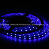 Striscia blu del chip 60LEDs 14.4W DC12V LED di colore IP65 SMD5050
