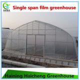 판매를 위한 야채에 의하여 이용되는 플라스틱 필름 온실