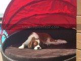 Perro mascota Cama muebles de ratán con dosel para uso en exteriores