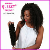 Cabelo etíope cru não processado humano Curly Kinky do Virgin do cabelo 100% do Afro da venda por atacado da qualidade superior