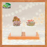 Bamboo Stand를 가진 4 Combination Square Ceramic Succulent Pot