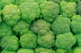Chinesischer IQF gefrorener organischer Brokkoli