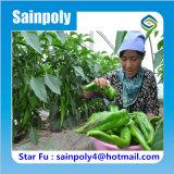 Serre chaude de film de Multi-Envergure de marque de Sainpoly pour le poivre