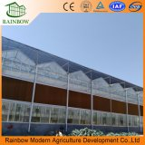 China fêz a qualidade superior Venlo a estufa de vidro modelo para Agricultral