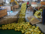 2014 جديد الصين بروز طازج عسل [بوملو] لأنّ ثمرة & قاوون