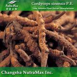 Polysaccharides purs de l'extrait 40% de 100% Cordyceps