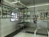 Equipo de la matanza del pollo de Halal de la buena calidad