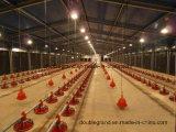 Prefabricated 강철 가금은 유숙한다, 장비 (PCH-7)를 가진 닭 홈