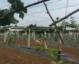 Tela agricultural preta da paisagem do controle dos PP Weed