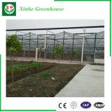Garantia de comércio estufa galvanizada do jardim do frame de aço/estufa Victorian de vidro para a venda