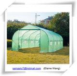 Chambre verte de film de grande taille commercial de culture hydroponique pour la tomate