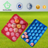Plastikfrucht-Tellersegmente Förderung-Preis-hohe Gradguoliang-pp. für das neue Kiwi-Verpacken