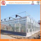 Chambres vertes en verre de Multi-Envergure de jardin/ferme/tunnel pour Rose/pomme de terre