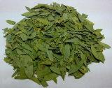 Extracto Sennoside a, pureza elevada de Angustifolia de la casia de B