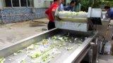 Vegetal automático industrial que desbasta o corte Shredding a máquina de processamento de lavagem da limpeza