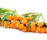 Olio di semi dell'olivello spinoso di alta qualità, olio essenziale