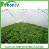Casa verde do túnel econômico da agricultura para Growing vegetal