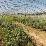 Образец свободно высушенное Wolfberry изготовления GMP мушмулы