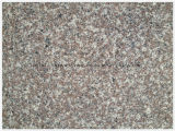 Chinois Le plus populaire Rouge / Purple / Brown Granite G664 pour Countertop