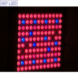 Nuovo giardino 600W LED Plant Grow Light di Product Distributor Wanted