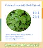 Het natuurlijke 20:1 van het 10:1 van het Poeder van het Uittreksel van Cristina Loosestrife Herb/Herba Lysimachiae
