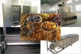 Secador de frutas de arándanos para producir arándanos secos de alta calidad