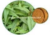 Hypérine de résolution normale d'humidité de 100%, extrait d'herbe d'Eupatorium du 5:1 /Fortune de 10:1 de 20:1 pour le sang de commande et stase dissolvante, estomac Invigorating