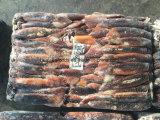 Calamares congelados chineses Tamanho do preço 100-200g