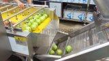 Secadora que se lava y de desecación de la fruta y verdura automática industrial