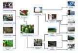 Connecteur de pipe, connecteur de boyau, garnitures de pipe pour le système de biogaz de taille de la famille