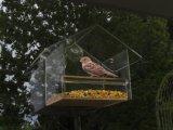 Eichhörnchen-Beweis-Acrylfenster-Vogel-Zufuhr