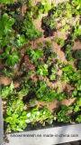 Il collegare esagonale del giardino di Sailin per protegge il reticolato